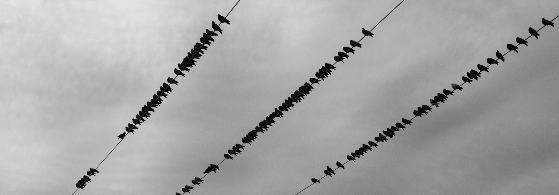 Crows lined up on telephone wire. Photo by Alex Jones, Unsplash