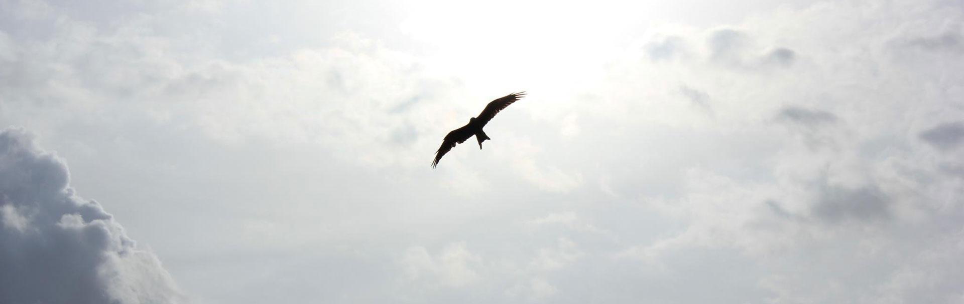 Corvid.Studio - Photo of crow flying - Unsplash image by Naveen Chandra